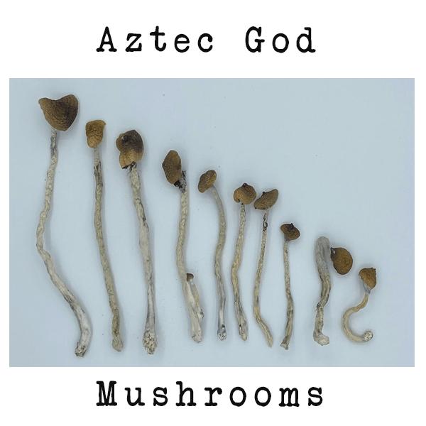 Aztec God - Dry Mushrooms